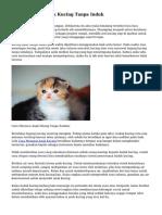 Cara Menjaga Anak Kucing Tanpa Induk