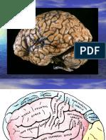 Mind & Brain