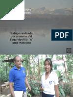 Presentacion Tala de Arboles