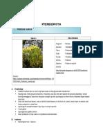 Pteridophyta.docx