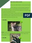 Animales Nativos en Peligro de Extincion