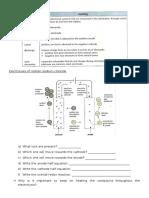 Electrolysis Review Worksheet