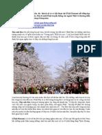 Rực Rỡ Mùa Xuân Nhật Bản Với Lễ Hội Hanami