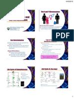 Gene Lecture 5 Sex Determination