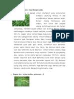 gulma pada tanaman pertanian