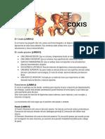 COCCIX
