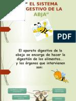 El Sistema Digestiva de Las Abejas