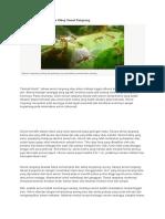 Rahasia Koloni Dan Siklus Hidup Semut Rangrang