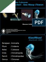 Chironex Fleckeri.pptx