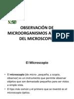 2. Observación Al Microscopio