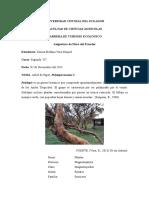 Polylepis Incana K.