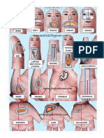 Relación de Los Órganos Internos Con Los Dedos