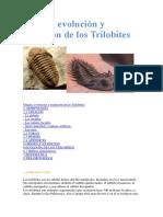 Origen, Evolución y Extinción de Los Trilobites