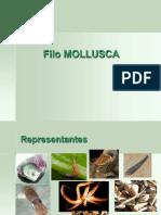 Filo Moluscos