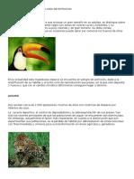 Animales de La Selva en Peligro de Extincion