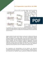 Aislamiento de Fragmentos Específicos de DNA