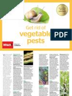 Get Rid of Vegetable Pests Online