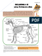 4H Dog Skeletal Anatomy