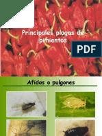 Principales Plagas de Paprika