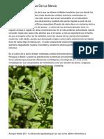 Manuales De Cultivo De La Stevia