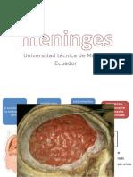 Meninges neuroanatomia