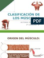 Anatomía (Miología) - Clasificación de Los Músculos