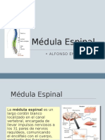 Anatomía - Médula Espinal