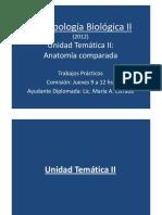 1 - Filogenia - Arcos Branquiales