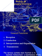 Nervous System Powerpoint2007_1