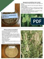 seminte plante pajisti