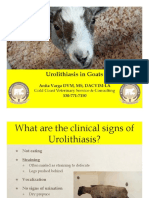 blocked goat urolithiasis handout