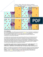 Antiporte Simporte-fisiologia-transporte membrana