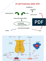3_colinomimetici-antimuscarinici