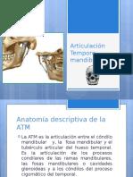 Articulación Temporo Mandibular..