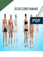 Organização Do Corpo Humano e o Seu Estudo (2)