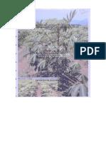 Manejo Poscosecha y Evaluacion de La Calidad en Yuca
