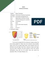 LAPORAN-Struktur-Buah-Dan-Biji.doc
