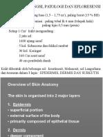 anatomi, eflouresensi kulit