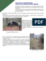 soprValdeMez24-12-015