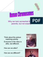 Human Chromosomes Powerpoint