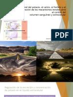 Regulacion renal del potasio calcio fosfato y magnesio cap29