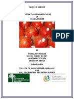 Supply Chain of Pomegranate