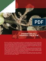 6 Principali Ampelopatie