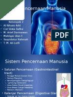 sistempencernaanmanusia-131003011851-phpapp02