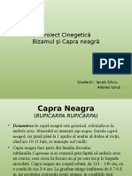 Proiect Cinegetica