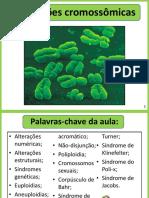 Alterações Cromossômicas Com Revisão de Divisão Celular