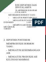 2-Hipofisis