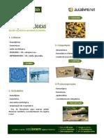 04 Apostila Relacoes Biologicas