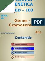 T-10-Genes