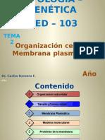 T 02 M.plasmática
